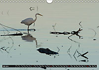 Silberreiher - elegante Jäger (Wandkalender 2019 DIN A4 quer) - Produktdetailbild 7