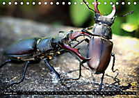 simply the best - das Beste von PhotomasAT-Version (Tischkalender 2019 DIN A5 quer) - Produktdetailbild 2