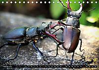 simply the best - das Beste von PhotomasAT-Version (Tischkalender 2019 DIN A5 quer) - Produktdetailbild 2
