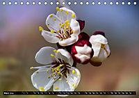 simply the best - das Beste von PhotomasAT-Version (Tischkalender 2019 DIN A5 quer) - Produktdetailbild 3