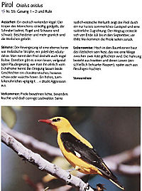 Singvögel, m. Audio-CD - Produktdetailbild 6