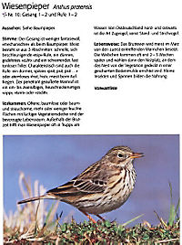 Singvögel, m. Audio-CD - Produktdetailbild 4