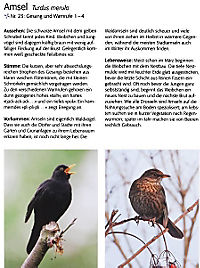 Singvögel, m. Audio-CD - Produktdetailbild 5