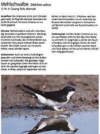 Singvögel, m. Audio-CD - Produktdetailbild 3