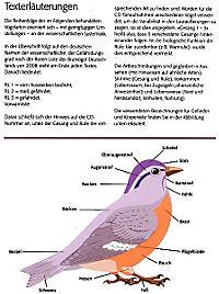 Singvögel, m. Audio-CD - Produktdetailbild 2