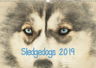 Sledgedogs 2019 / UK-Version (Wall Calendar 2019 DIN A3 Landscape), Andrea Redecker
