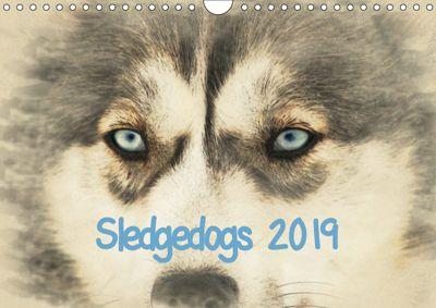 Sledgedogs 2019 / UK-Version (Wall Calendar 2019 DIN A4 Landscape), Andrea Redecker