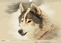 Sledgedogs 2019 / UK-Version (Wall Calendar 2019 DIN A4 Landscape) - Produktdetailbild 4