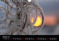 Small miracles of daily routine (Wall Calendar 2019 DIN A4 Landscape) - Produktdetailbild 1