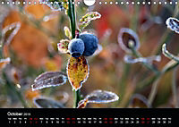 Small miracles of daily routine (Wall Calendar 2019 DIN A4 Landscape) - Produktdetailbild 10