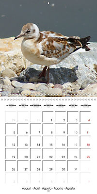 Smart Seagulls (Wall Calendar 2019 300 × 300 mm Square) - Produktdetailbild 8