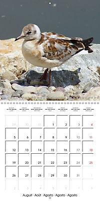 Smart Seagulls (Wall Calendar 2019 300 × 300 mm Square) - Produktdetailbild 8