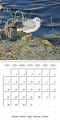 Smart Seagulls (Wall Calendar 2019 300 × 300 mm Square) - Produktdetailbild 1