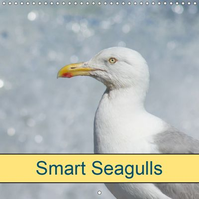 Smart Seagulls (Wall Calendar 2019 300 × 300 mm Square), kattobello