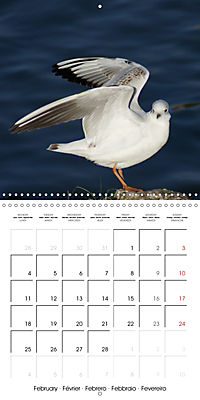 Smart Seagulls (Wall Calendar 2019 300 × 300 mm Square) - Produktdetailbild 2