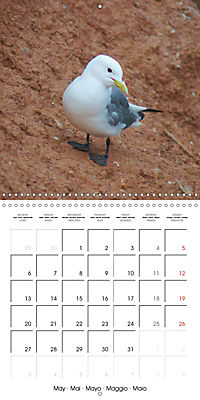 Smart Seagulls (Wall Calendar 2019 300 × 300 mm Square) - Produktdetailbild 5
