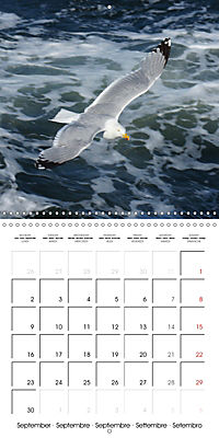 Smart Seagulls (Wall Calendar 2019 300 × 300 mm Square) - Produktdetailbild 9