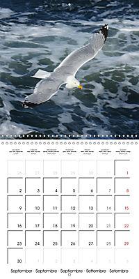 Smart Seagulls (Wall Calendar 2019 300 × 300 mm Square) - Produktdetailbild 9