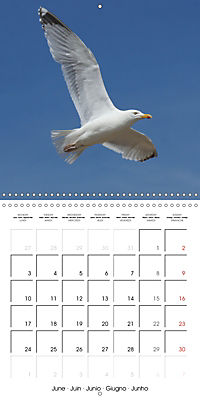 Smart Seagulls (Wall Calendar 2019 300 × 300 mm Square) - Produktdetailbild 6