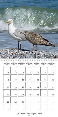 Smart Seagulls (Wall Calendar 2019 300 × 300 mm Square) - Produktdetailbild 7