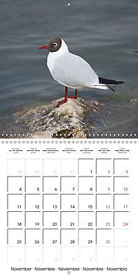Smart Seagulls (Wall Calendar 2019 300 × 300 mm Square) - Produktdetailbild 11