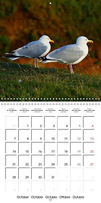 Smart Seagulls (Wall Calendar 2019 300 × 300 mm Square) - Produktdetailbild 10