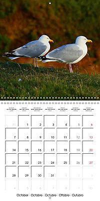 Smart Seagulls (Wall Calendar 2019 300 × 300 mm Square) - Produktdetailbild 10