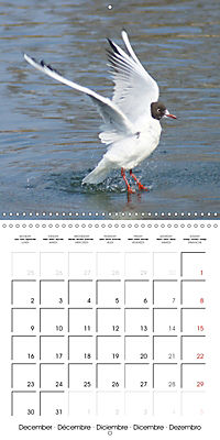 Smart Seagulls (Wall Calendar 2019 300 × 300 mm Square) - Produktdetailbild 12