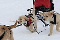 Snow Buddies - Abenteuer in Alaska - Produktdetailbild 9