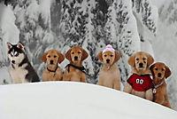 Snow Buddies - Abenteuer in Alaska - Produktdetailbild 8