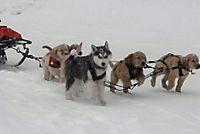 Snow Buddies - Abenteuer in Alaska - Produktdetailbild 7