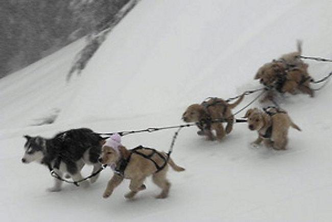 Snow Buddies – Abenteuer In Alaska