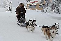 Snow Buddies - Abenteuer in Alaska - Produktdetailbild 3