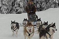 Snow Buddies - Abenteuer in Alaska - Produktdetailbild 10