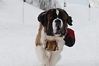 Snow Buddies - Abenteuer in Alaska - Produktdetailbild 4