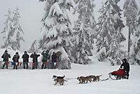 Snow Buddies - Abenteuer in Alaska - Produktdetailbild 5