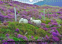 Snowdonia - Wales' wilder Norden (Wandkalender 2019 DIN A4 quer) - Produktdetailbild 2