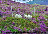 Snowdonia - Wales' wilder Norden (Wandkalender 2019 DIN A2 quer) - Produktdetailbild 2