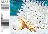 So schön sind die Malediven (Tischkalender 2019 DIN A5 quer) - Produktdetailbild 9