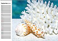 So schön sind die Malediven (Wandkalender 2019 DIN A2 quer) - Produktdetailbild 9