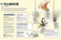 So überleben Zimmerpflanzen garantiert - Produktdetailbild 1