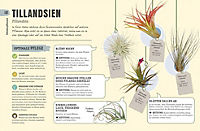 So überleben Zimmerpflanzen garantiert - Produktdetailbild 2