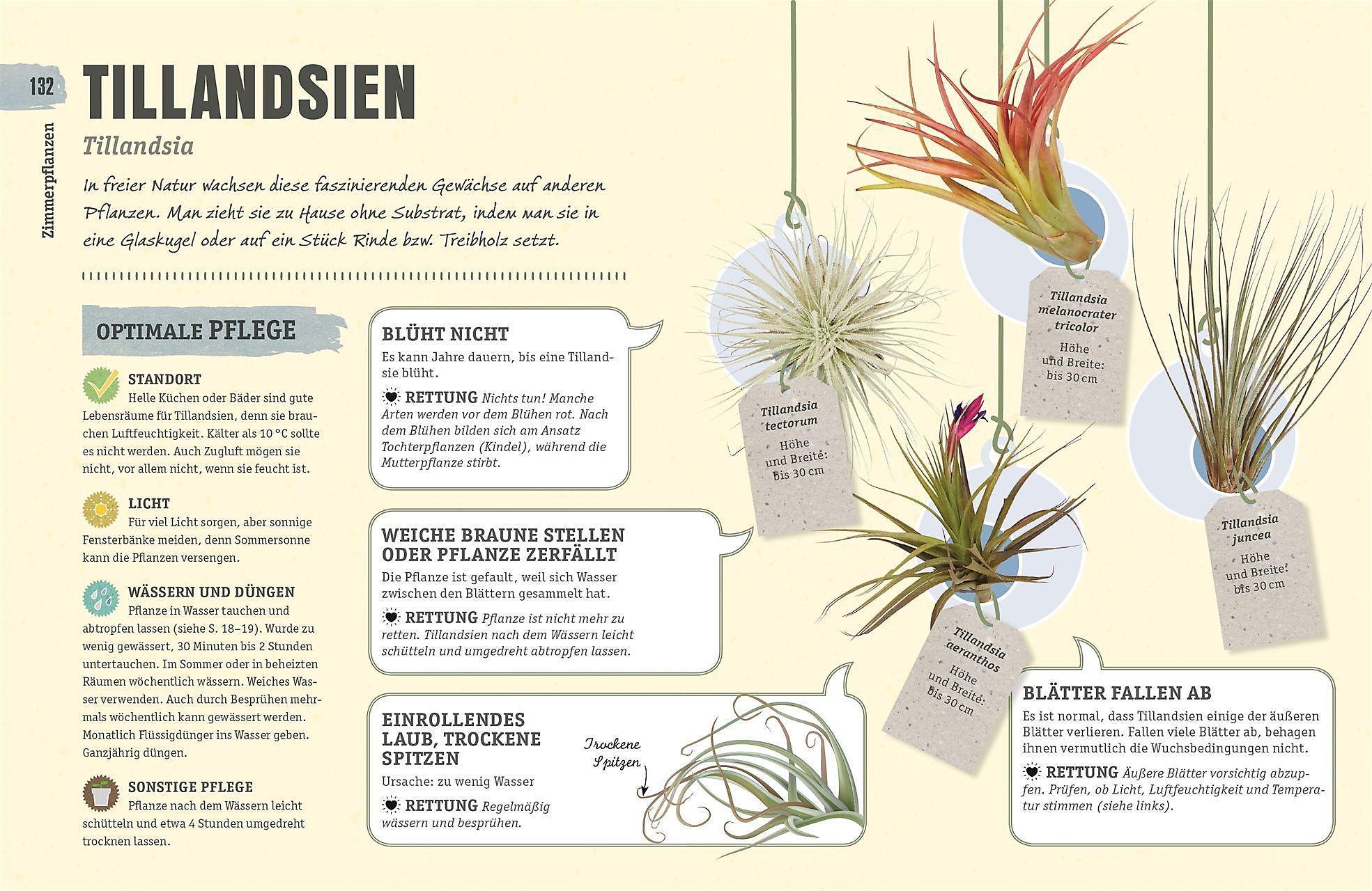 So überleben Zimmerpflanzen garantiert Buch - Weltbild.de