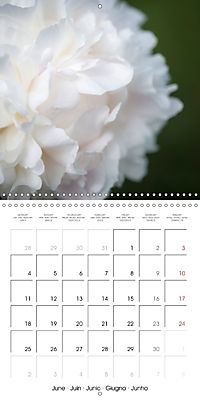 Soft White Flowers (Wall Calendar 2018 300 × 300 mm Square) - Produktdetailbild 6