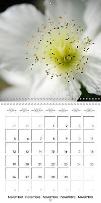 Soft White Flowers (Wall Calendar 2018 300 × 300 mm Square) - Produktdetailbild 11