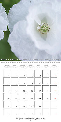 Soft White Flowers (Wall Calendar 2019 300 × 300 mm Square) - Produktdetailbild 5