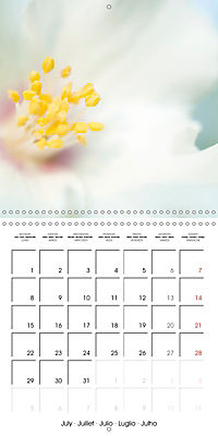 Soft White Flowers (Wall Calendar 2019 300 × 300 mm Square) - Produktdetailbild 7
