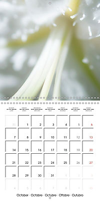Soft White Flowers (Wall Calendar 2019 300 × 300 mm Square) - Produktdetailbild 10