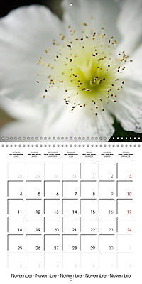 Soft White Flowers (Wall Calendar 2019 300 × 300 mm Square) - Produktdetailbild 11