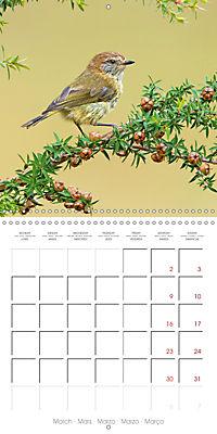 Songbirds of Australia (Wall Calendar 2019 300 × 300 mm Square) - Produktdetailbild 3